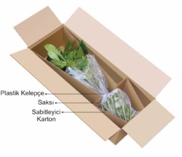 Taşınırken Çiçekler Nasıl Paketlenir